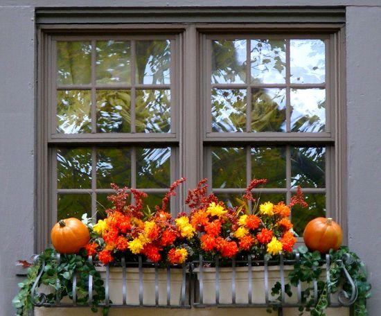Окно, оформленное специально для праздника Хэллоуин